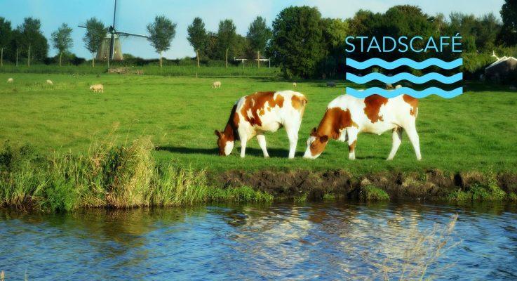 Stadscafe 6 verdwijnt de koe uit de polder
